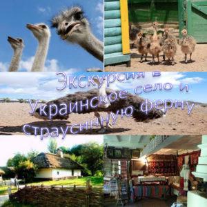 ekskursiya-v-ukr-selo-i-strausi
